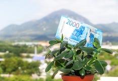 Una nota de una divisa nacional rusa con un valor nominal de dos mil rublos en un árbol del dinero fotos de archivo