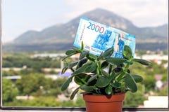 Una nota de una divisa nacional rusa con un valor nominal de dos mil rublos en un árbol del dinero fotos de archivo libres de regalías