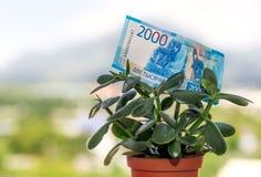 Una nota de una divisa nacional rusa con un valor nominal de dos mil rublos en un árbol del dinero fotografía de archivo