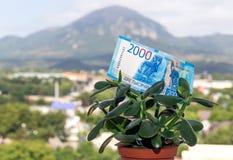 Una nota de una divisa nacional rusa con un valor nominal de dos mil rublos en un árbol del dinero foto de archivo libre de regalías
