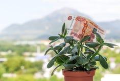 Una nota de la divisa nacional rusa con un valor nominal de cinco mil rublos en un árbol del dinero imagen de archivo libre de regalías
