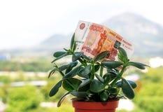 Una nota de la divisa nacional rusa con un valor nominal de cinco mil rublos en un árbol del dinero foto de archivo