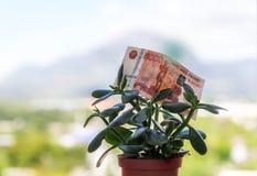 Una nota de la divisa nacional rusa con un valor nominal de cinco mil rublos en un árbol del dinero fotografía de archivo libre de regalías