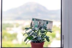 Una nota de la divisa nacional rusa con un valor nominal de mil rublos en un árbol del dinero foto de archivo libre de regalías