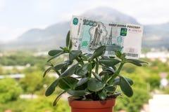 Una nota de la divisa nacional rusa con un valor nominal de mil rublos en un árbol del dinero fotos de archivo libres de regalías
