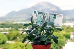 Una nota de la divisa nacional rusa con un valor nominal de mil rublos en un árbol del dinero fotografía de archivo libre de regalías