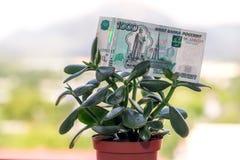 Una nota de la divisa nacional rusa con un valor nominal de mil rublos en un árbol del dinero imagen de archivo libre de regalías