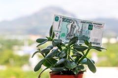 Una nota de la divisa nacional rusa con un valor nominal de mil rublos en un árbol del dinero fotos de archivo