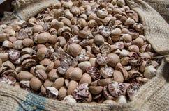 Una nuez de betel secada en un saco Fotos de archivo libres de regalías