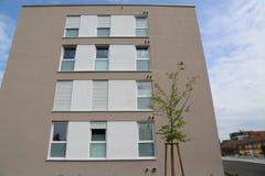 Una nuova casa e un giovane albero vicino  Immagine Stock Libera da Diritti