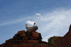 Una nuova vista del tempio decomposto nell'area di Wat Mahathat Fotografia Stock