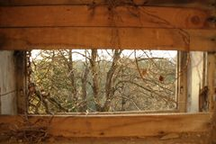 Una ojeada del árbol del misterio fotos de archivo