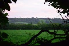 Una ojeada fuera del bosque Fotografía de archivo