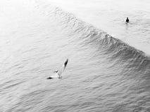 Una onda se rompe mientras que un pájaro vuela cerca almacen de video