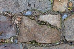 Una opinión cercana sobre un ladrillo de un camino viejo del ladrillo Ladrillo, hierba verde, musgo Fotografía de archivo libre de regalías