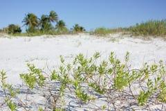 una opinión de la playa Imagen de archivo libre de regalías