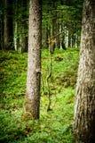 Una opinión de los bosques fotografía de archivo libre de regalías