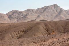 Acantilados de la arena en el Oriente Medio Fotos de archivo libres de regalías