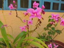 Una orquídea en primavera Fotos de archivo