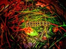 Una oruga de la mariposa de monarca que brilla intensamente Fotografía de archivo libre de regalías