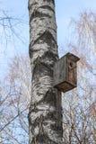 Una pajarera de madera puesta a un árbol de abedul viejo Imagen de archivo libre de regalías