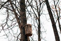 Una pajarera en el árbol Una pajarera hecha en casa hecha por el schoolchil Imágenes de archivo libres de regalías