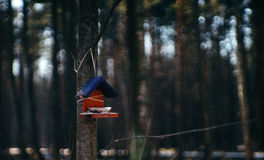Una pajarera en el medio del bosque Fotos de archivo libres de regalías