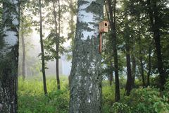 Una pajarera en un árbol de abedul en un bosque brumoso Fotografía de archivo libre de regalías