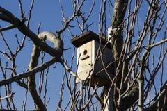 Una pajarera en un árbol entre las ramas en un invierno brillante DA Foto de archivo