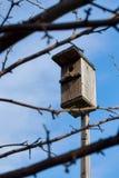Una pajarera en un palillo de madera a través de ramas con el fondo del cielo azul imagen de archivo libre de regalías