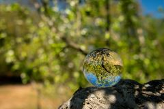 Una palla di vetro che si trova su un ramo di un albero immagini stock libere da diritti