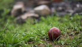 Una palla per il gioco con un cane sui precedenti di un mucchio di rifiuti fotografia stock