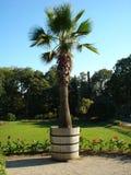 Una palma en un jardín botánico imagen de archivo