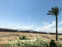 Una palma tropicale sola nel deserto sotto il cielo aperto sulla vacanza, una località di soggiorno tropicale, del sud, calda sot fotografie stock libere da diritti