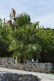 Una palma verde alta si sviluppa dietro un recinto di pietra Fotografia Stock