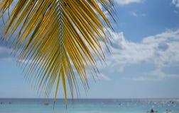 Una palmera Fotografía de archivo libre de regalías