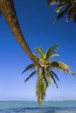 Una palmera del coco cuelga sobre una laguna fotografía de archivo