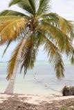 Una palmera en las Bahamas Fotos de archivo libres de regalías