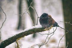 Una paloma Fotos de archivo
