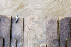 Una paloma por el río Támesis Fotos de archivo libres de regalías