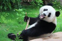 Una panda gigante imagenes de archivo