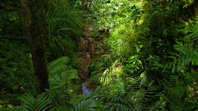Una panoramica della giungla stock footage