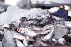 Una parada de la venta de los pescados del borde del camino en Kerala, la India, la India del sur una vista común en el lado del  imagen de archivo libre de regalías
