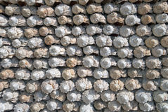 Una pared de los rapanas del mar Imagen de archivo