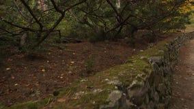 Una pared de piedra en el parque viejo almacen de metraje de vídeo