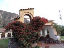 Una pared pintoresca y rosas en Perú Fotos de archivo libres de regalías