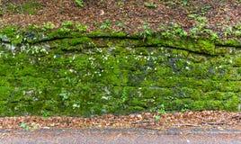 Una parete al lato della strada coperta di muschio immagine stock