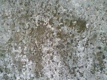 Una parete del muschio di verde lungo Fotografia Stock