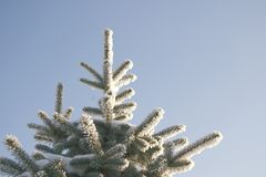 Una parte del árbol de la nieve bajo el cielo azul Foto de archivo