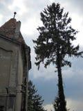 una parte di torre del castello accanto ad un vecchio albero gigante Fotografia Stock Libera da Diritti